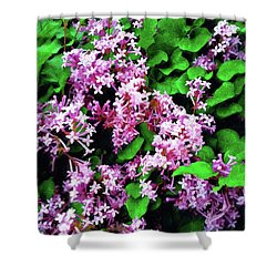 Shower Curtain featuring the painting Lilacs In May by Sandy MacGowan