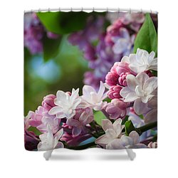 Lilacs Of Spring Shower Curtain