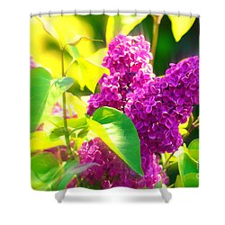 Shower Curtain featuring the photograph Lilacs by Susanne Van Hulst