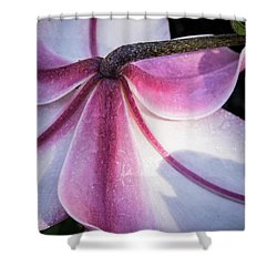 Lilies Backside Shower Curtain by Jean Noren