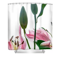 Pink Oriental Starfire Lilies Shower Curtain