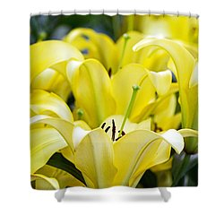 Lilies Of The Field #2 Shower Curtain