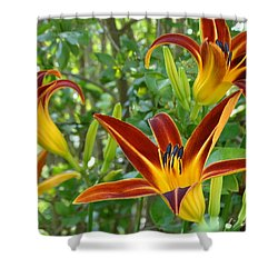 Shower Curtain featuring the photograph Lilies Sunrise by Rebecca Overton