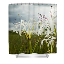 Lilies Thunder Shower Curtain by Christopher L Thomley