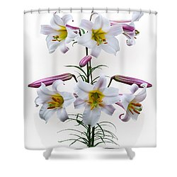 Lilium Regale Shower Curtain by Jane McIlroy