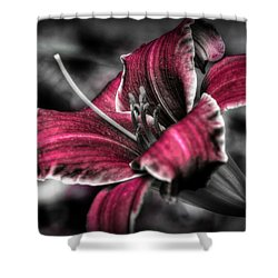 Lilly 3 Shower Curtain