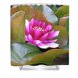Lilly In Bloom Shower Curtain by Wendy McKennon