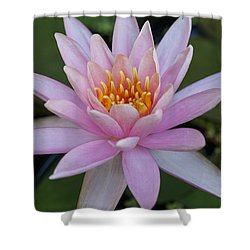 Lilly In Pink Shower Curtain