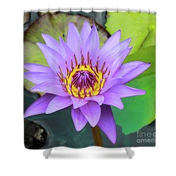 Lilly In Purple  Shower Curtain