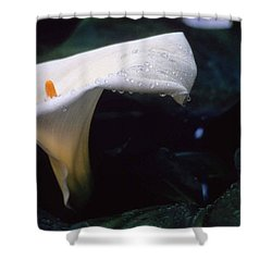 Lilly Of The Tears Shower Curtain by Laurie Paci