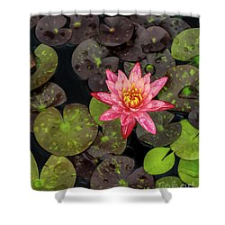 Lilly Pad, Red Lilly Shower Curtain