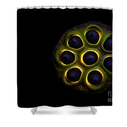 Lilly Pad Seed Pod Shower Curtain