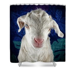 Shower Curtain featuring the photograph Lilo Is Not Impressed. by TC Morgan