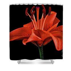 Lily 11018-1 Shower Curtain