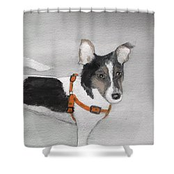 Lily Shower Curtain by Carole Robins
