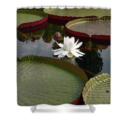 Lily Shower Curtain by David Bearden