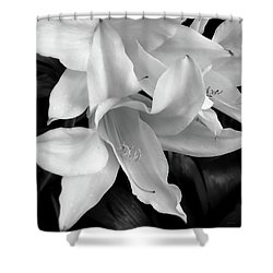 Lily Flowers Black And White Shower Curtain