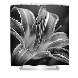 Lily In Black And White Shower Curtain