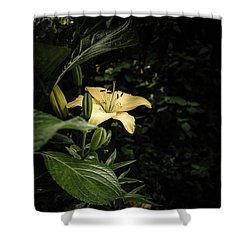 Shower Curtain featuring the photograph Lily In The Garden Of Shadows by Marco Oliveira