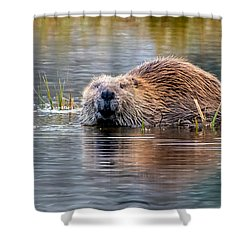Lily Lake Beaver Shower Curtain