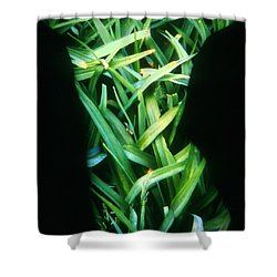 Lily Leaves Shower Curtain by Arla Patch