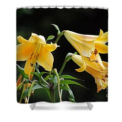 Lily Lily Where Art Thou Lily Shower Curtain