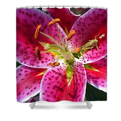 Shower Curtain featuring the photograph Lily by Mary-Lee Sanders