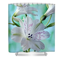 Lily Of The Incas Shower Curtain