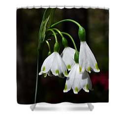 Lily Of The Valley 003 Shower Curtain