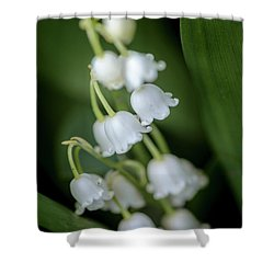 Lily Of The Valley Bouquet II Shower Curtain