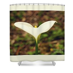 Lily Of The Valley Shower Curtain by Cassandra Buckley