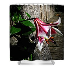 Lily On Barn Wood Shower Curtain by Judy  Johnson