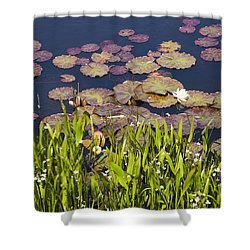 Lily Pads In A Lake Near Dunmanus Bay Shower Curtain
