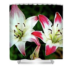 Shower Curtain featuring the photograph Lily Pink Reflections by LeeAnn McLaneGoetz McLaneGoetzStudioLLCcom