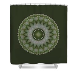 Lily Plaid Shower Curtain