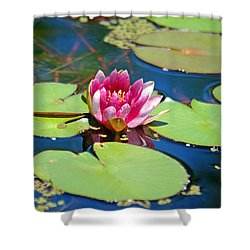 Lily Pond Shower Curtain by Donna Bentley