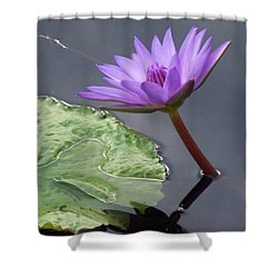 Lily Pond Shower Curtain by Eric  Schiabor