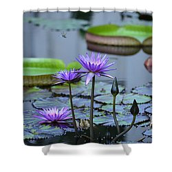 Lily Pond Wonders Shower Curtain by Maria Urso