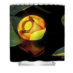 Shower Curtain featuring the photograph Lily Reflection by Sandra Bronstein
