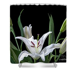 A White Oriental Lily Surrounded Shower Curtain