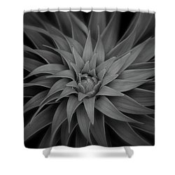 Lily Swirl Shower Curtain