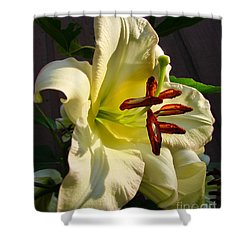 Lily's Morning Shower Curtain by Pamela Clements