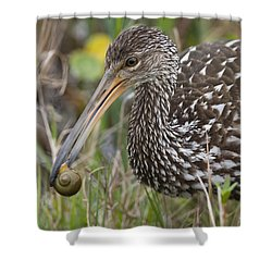 Limpkin, Aramus Guarauna Shower Curtain