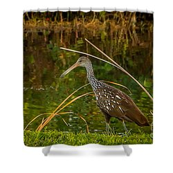 Limpkin At Water's Edge Shower Curtain