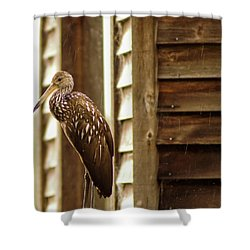 Limpkin Shower Curtain