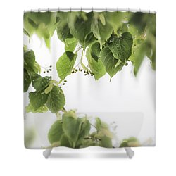 Linden In The Rain 2 -  Shower Curtain