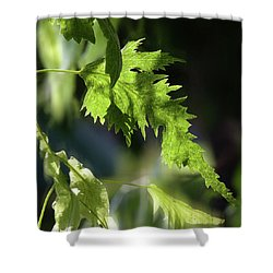 Linden Leaf - Shower Curtain