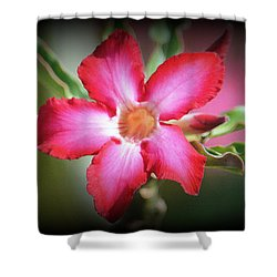 Lindsy Shower Curtain