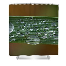 Linear Universe Shower Curtain