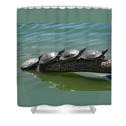 Lined Up Shower Curtain